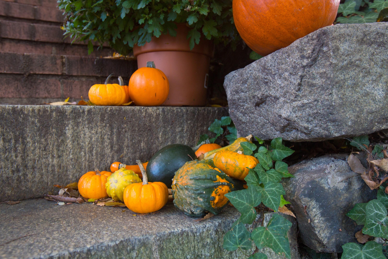 Autumn in Annapolis Rachel Frentsos